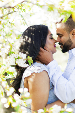 Cherry Blossom Engagement Photography Niagara on the Lake Vineland 11